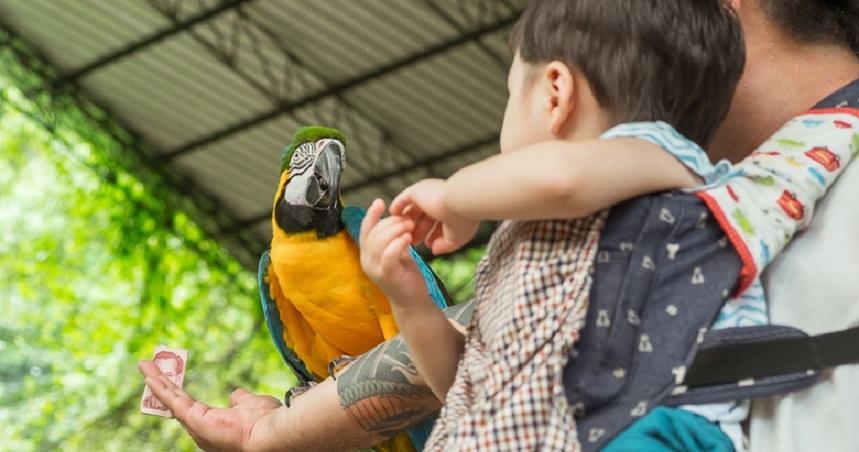 Парк птиц - небольшой парк