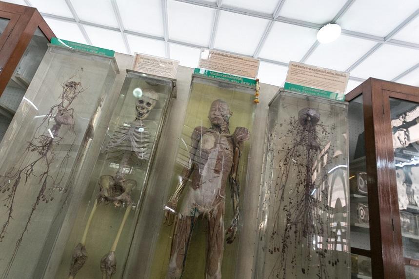 Музей судебной медицины Таиланд