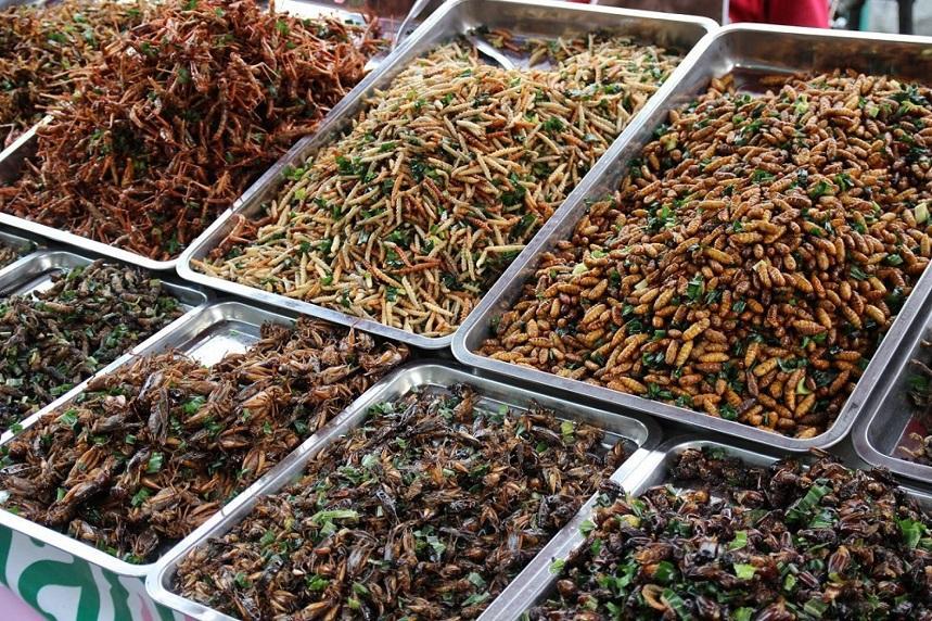 Прилавок рынка насекомых