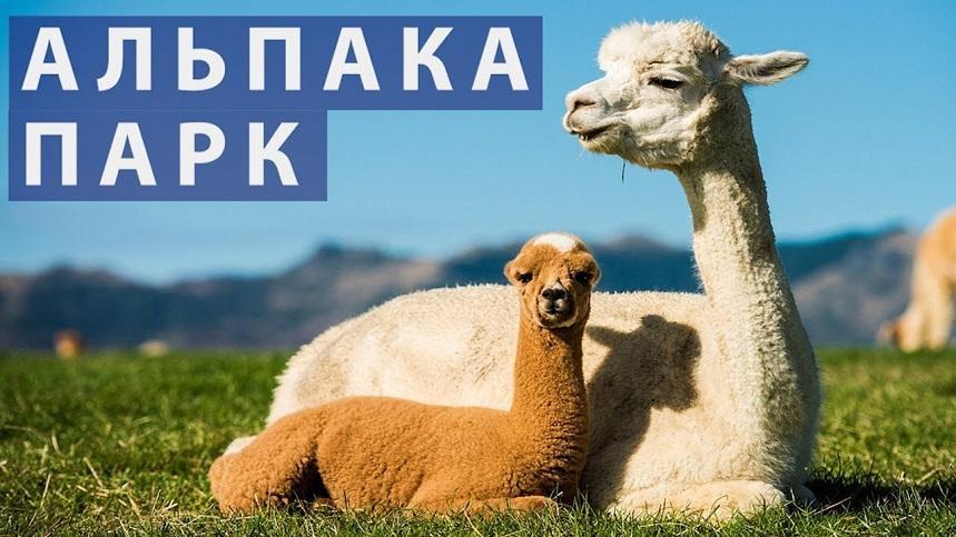 Альпака Парк (Земля королей)