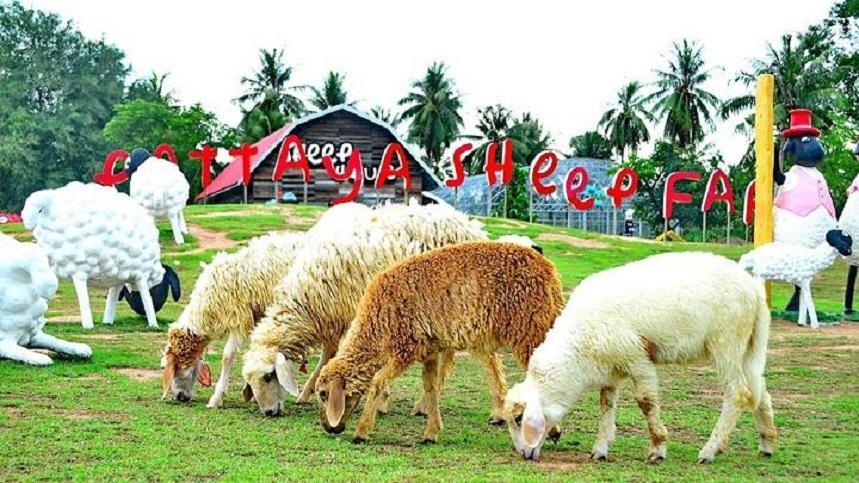 Овечья ферма + аквапарк Рамаяна в Паттайе
