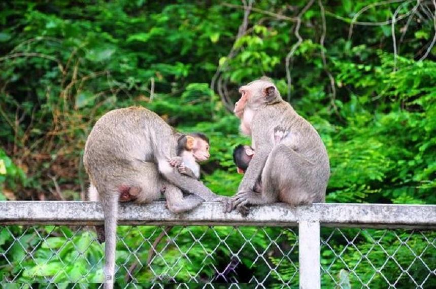 Гора обезьян в городе Банг Саен