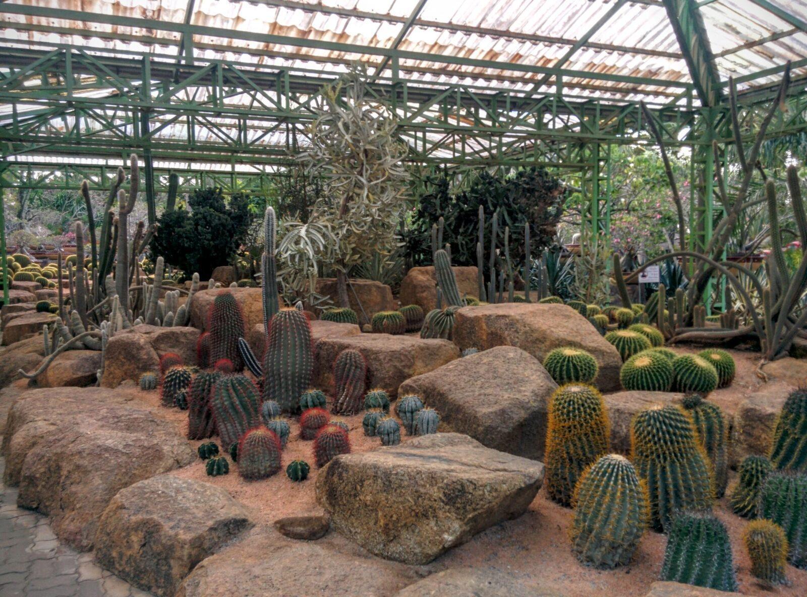 Фото сада кактусов