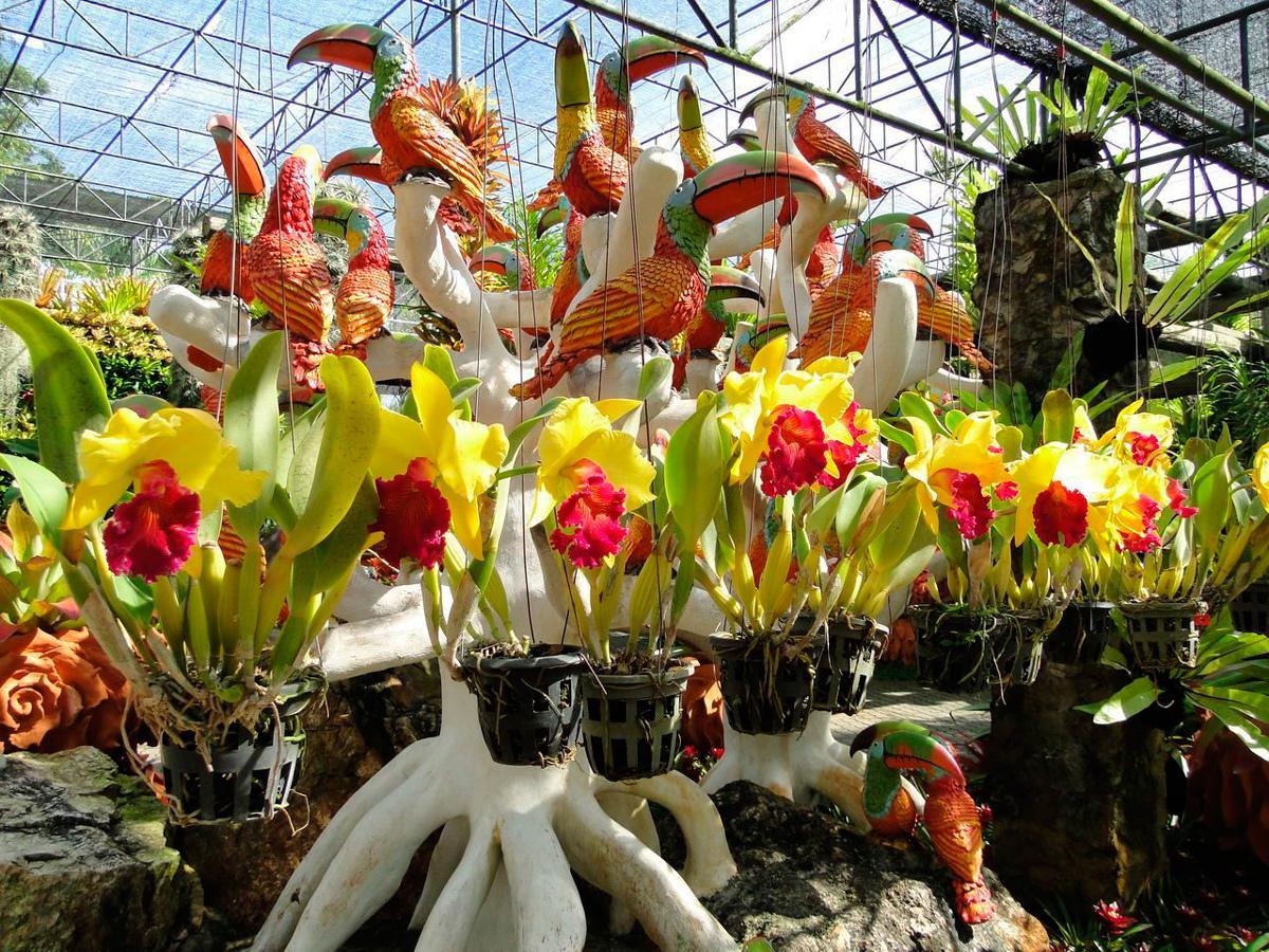 Фото сада орхидей в парке
