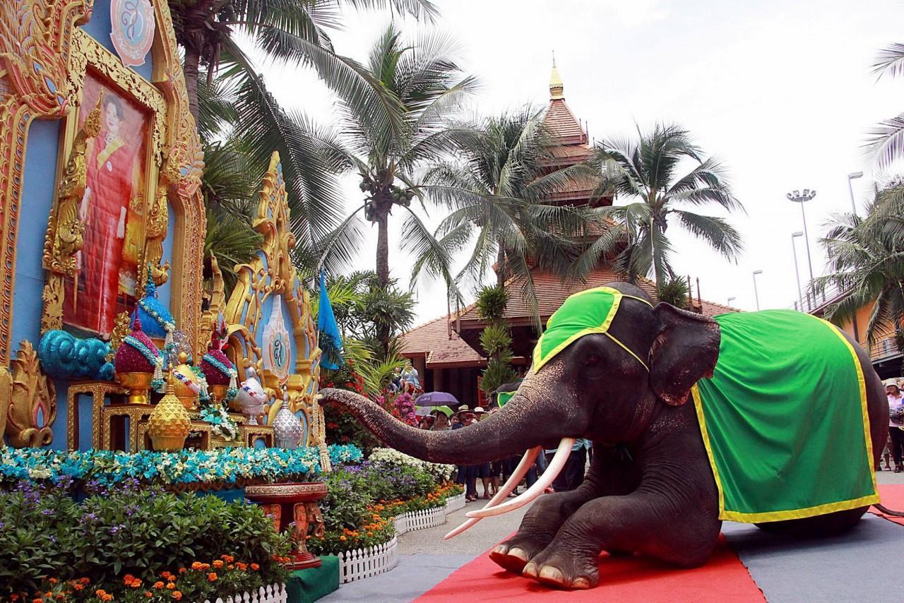 Фото шоу слонов