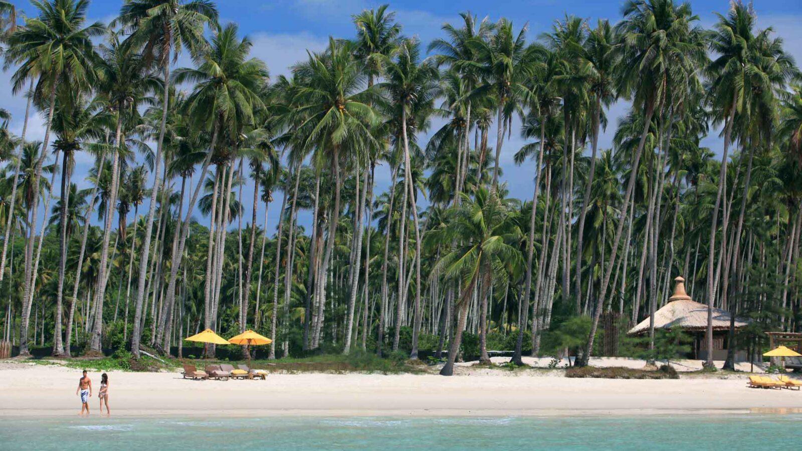 Фото пальм на острове