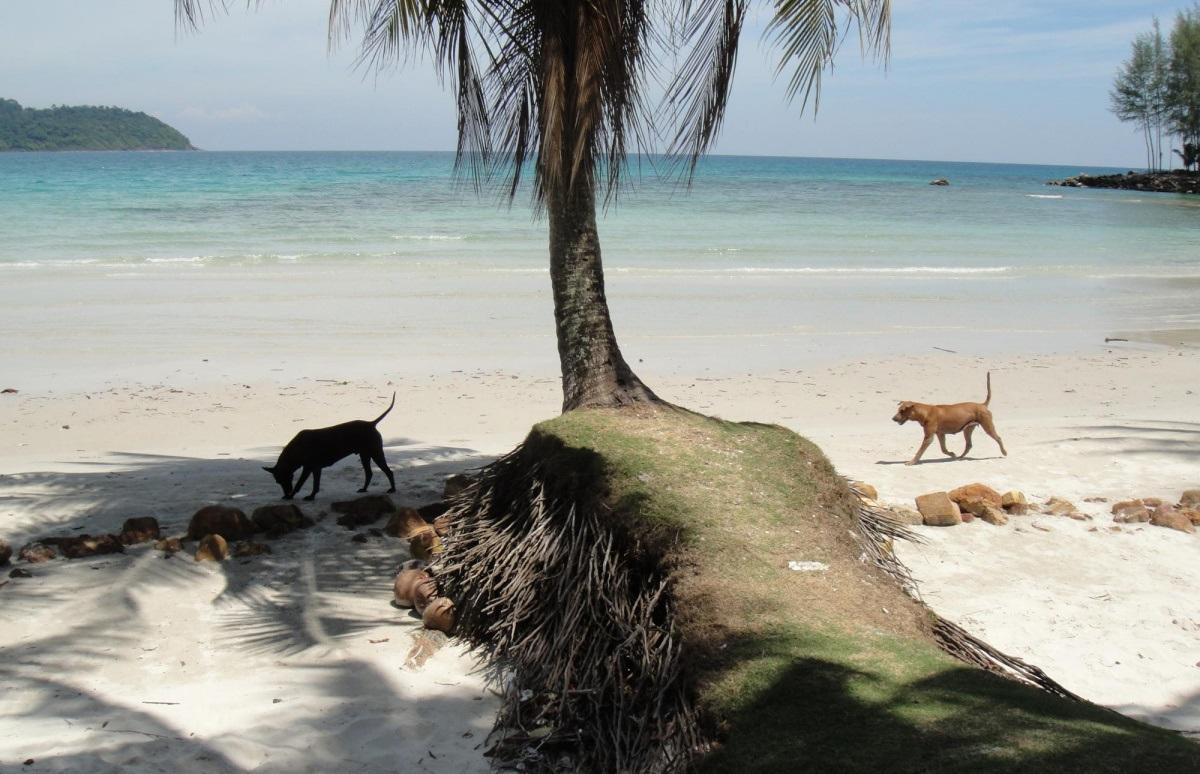 Фото собак на острове
