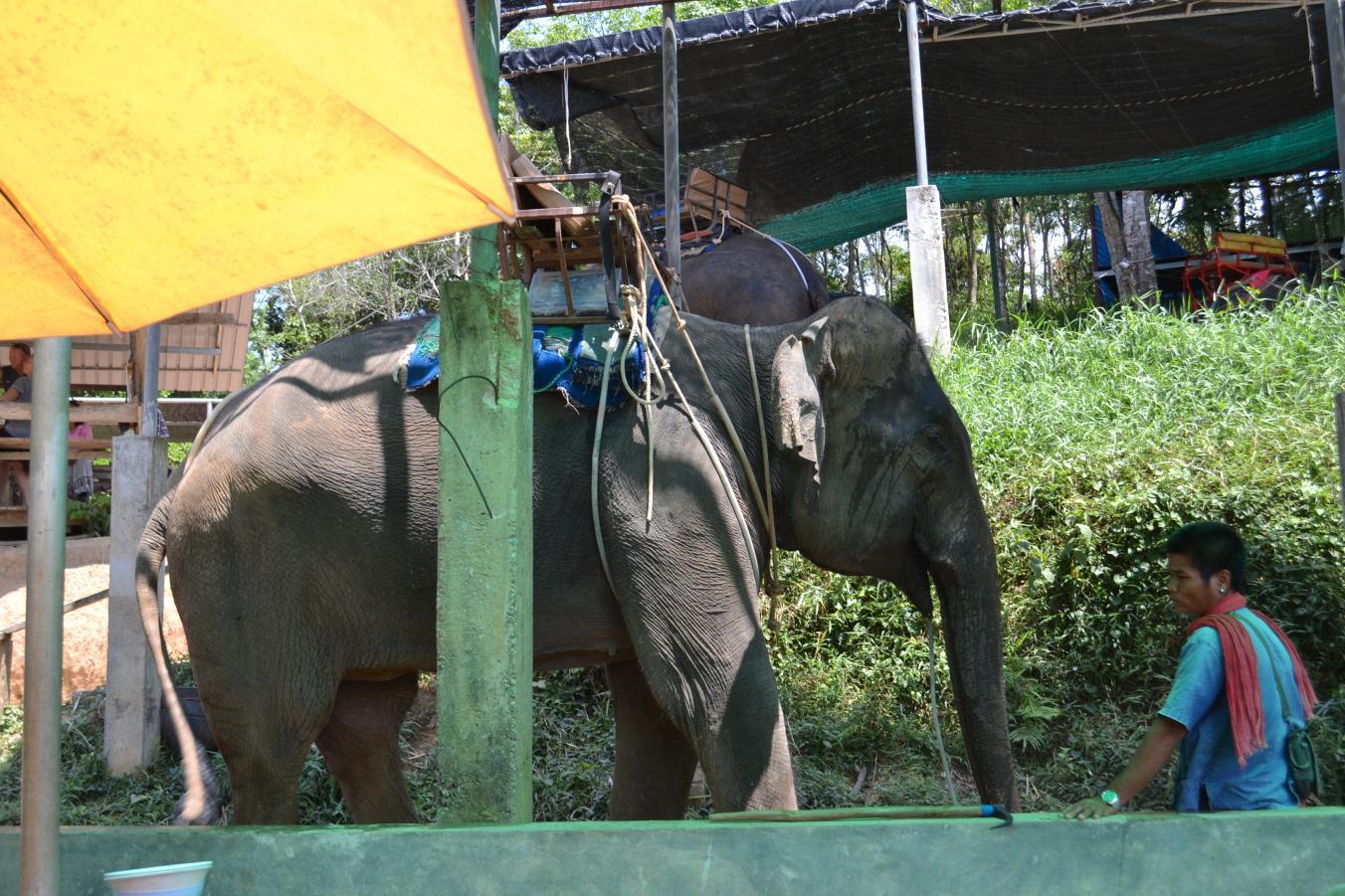 Фото слонов на ферме