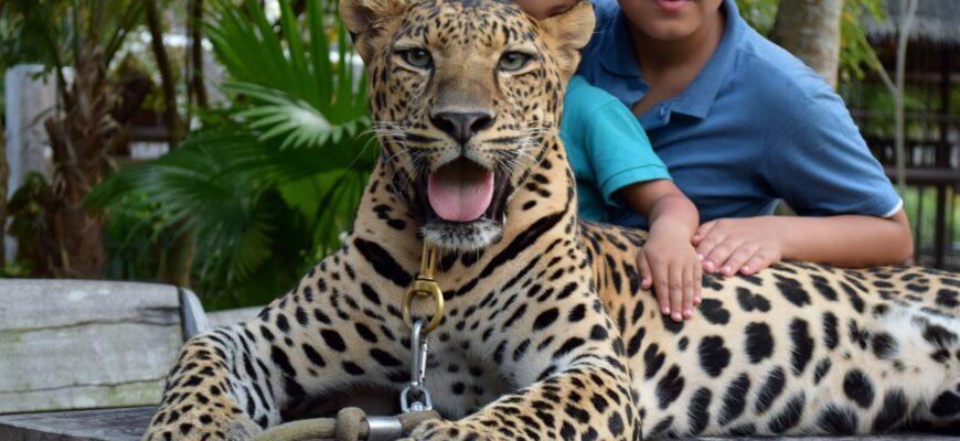 фото Пхукет Зоопарк